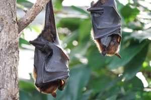 Bats and the Doppler Shift